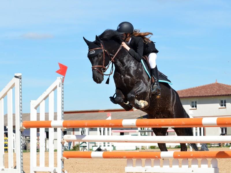 equitation passion chevaux