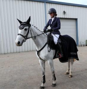 horse-3777654_640