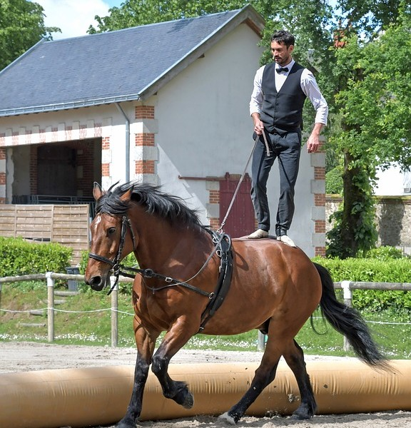 horse-3766473_960_720